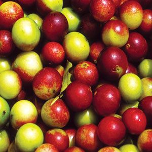 Came Camu Extract