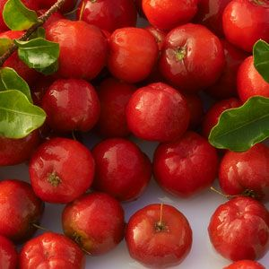 Acerola Cherry Concentrate